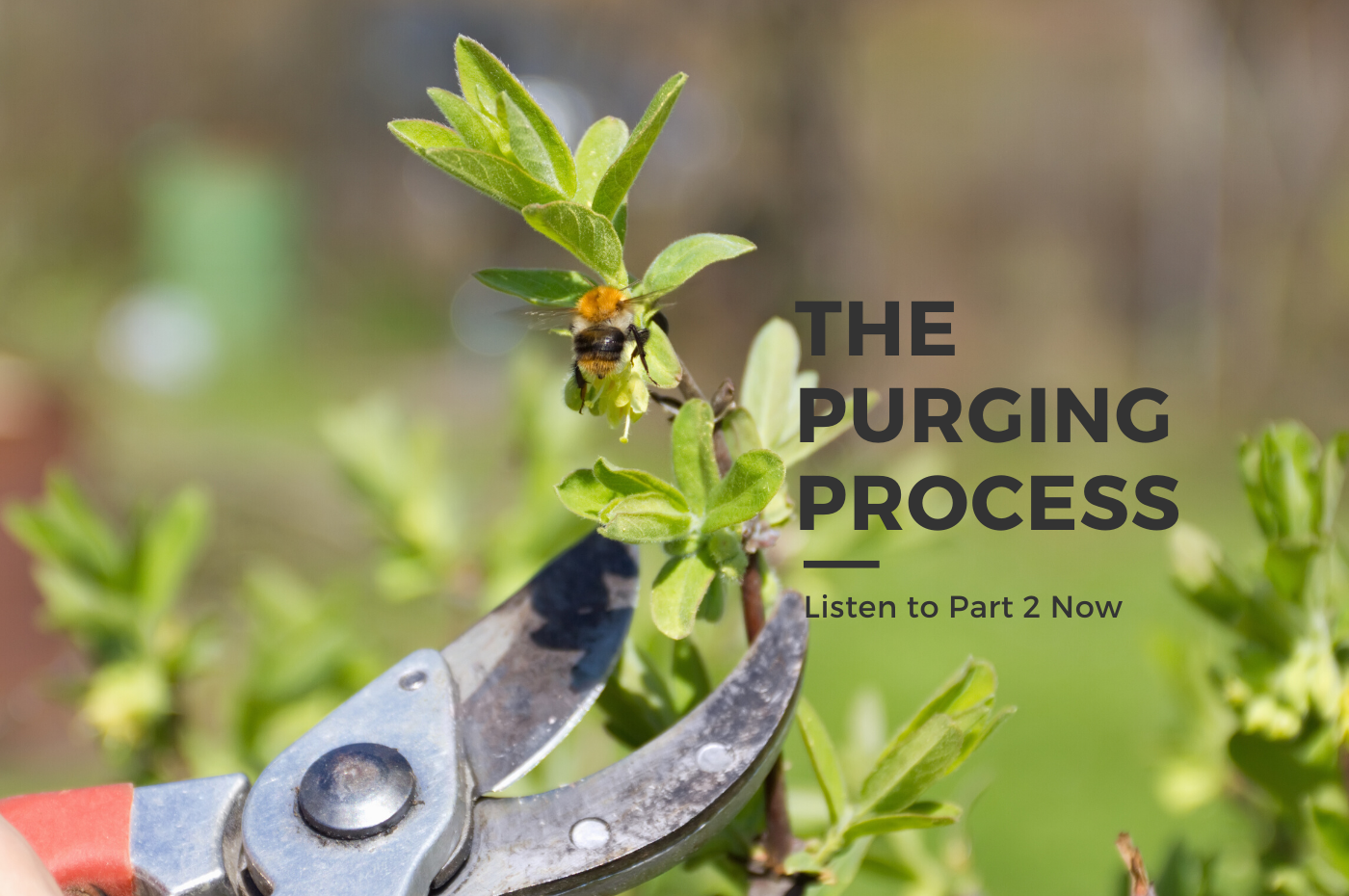 The Purging Process